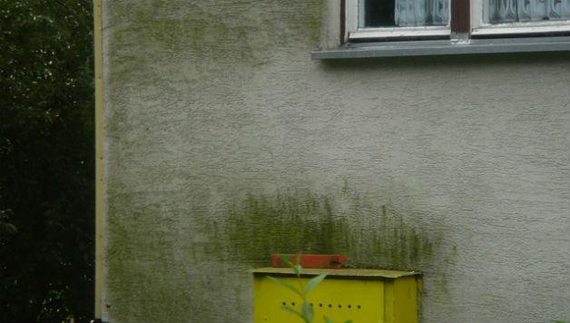 Jak usunąć mech na ścianie, fot.: Bolix